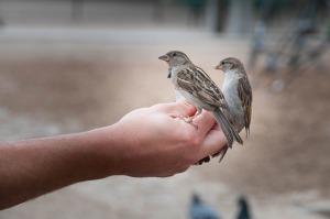 bird-818045_640