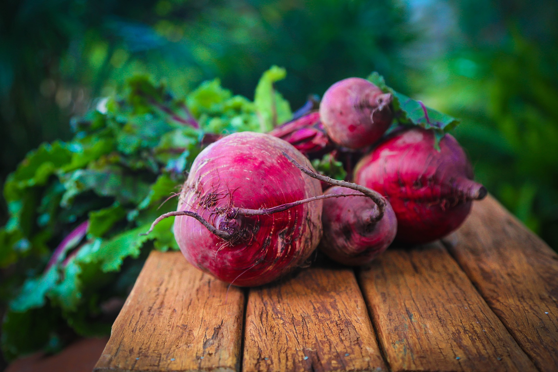 beetroot-knolle