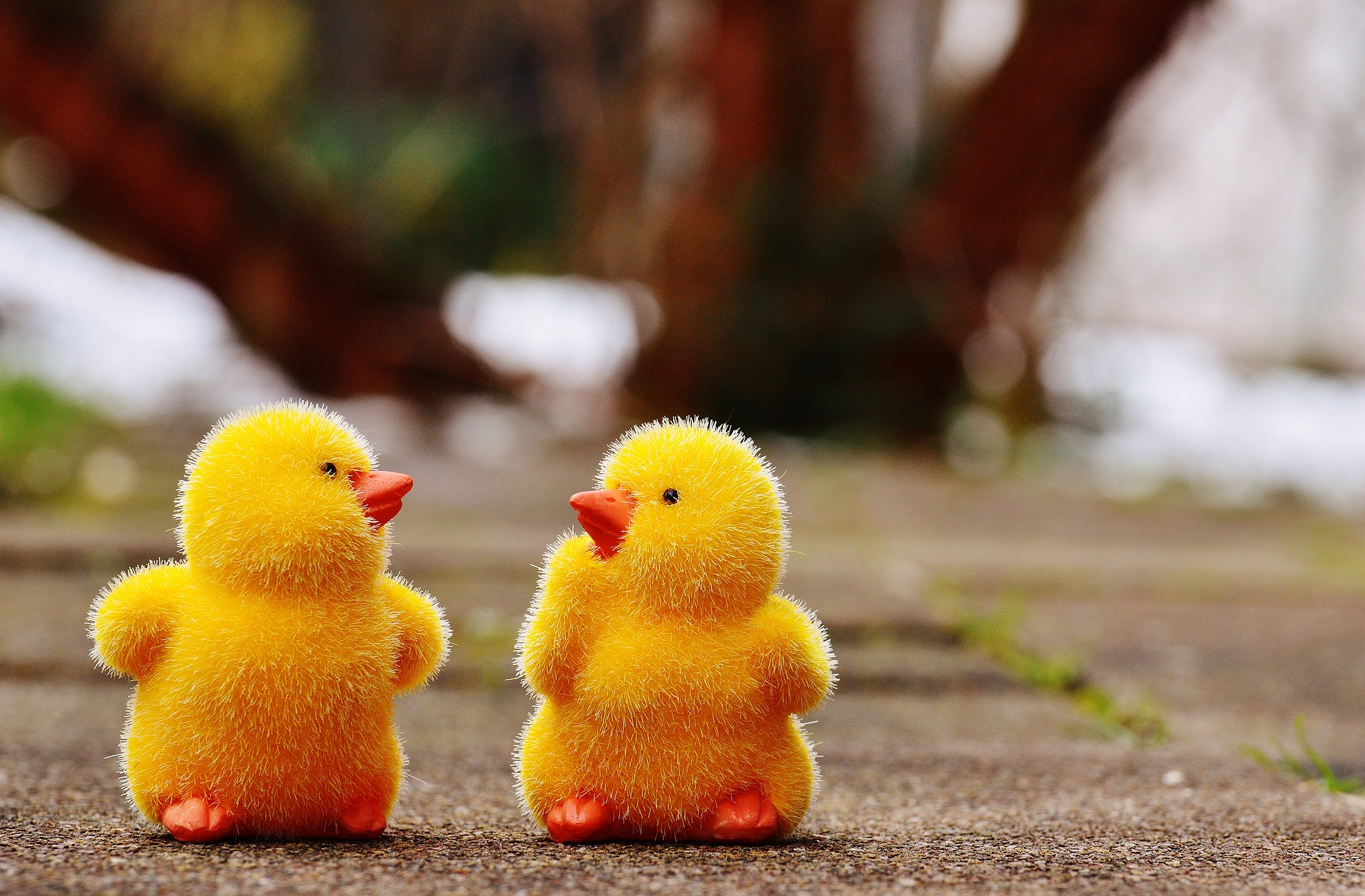 chicks-1159194_1920