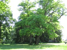 Lebens-Fragen-Antworten-Baum