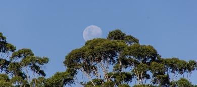 moon-1164144_640
