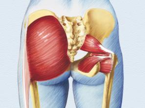 anatomie-gesasmuskulatur