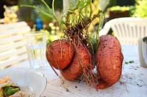 suesskartoffelpfalnze