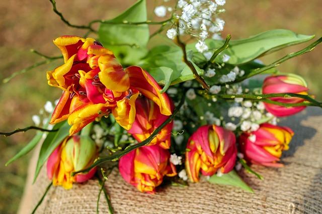 2017-02-tulips-2063097_640