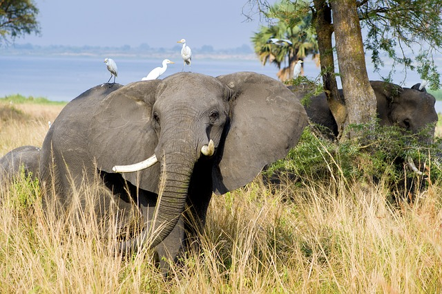 2017-03_elephant