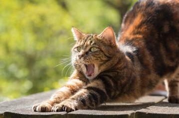 cat-814952_640
