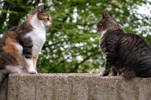 2017-08-cat-817798_640