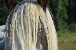 horse-2616582_640