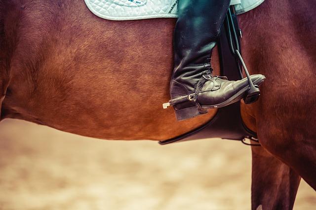 horse-2617017_640