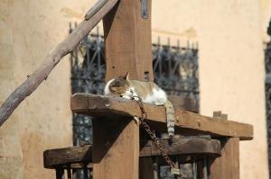 Katze-schlafend