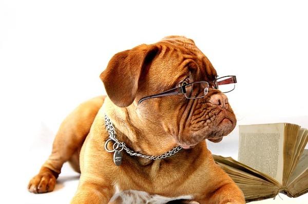 12-hund-brille