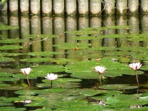 SriLanka_Panasonic 146