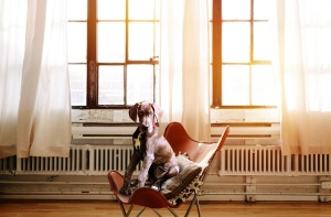 02-2018-dogchair