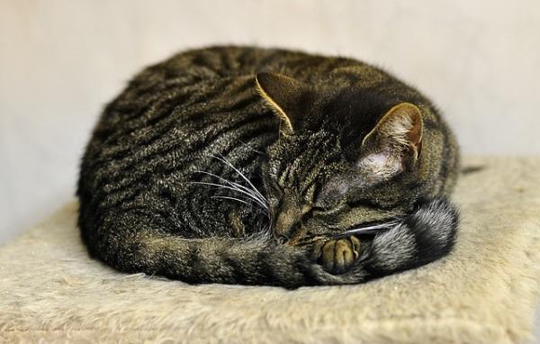 cat-2671132_640