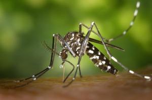 07-2018-mosquito