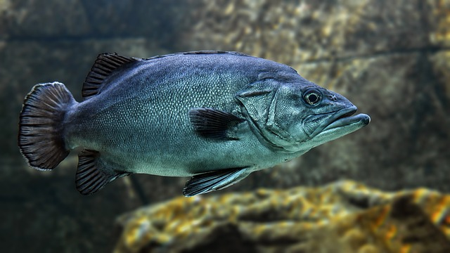 fish-boese