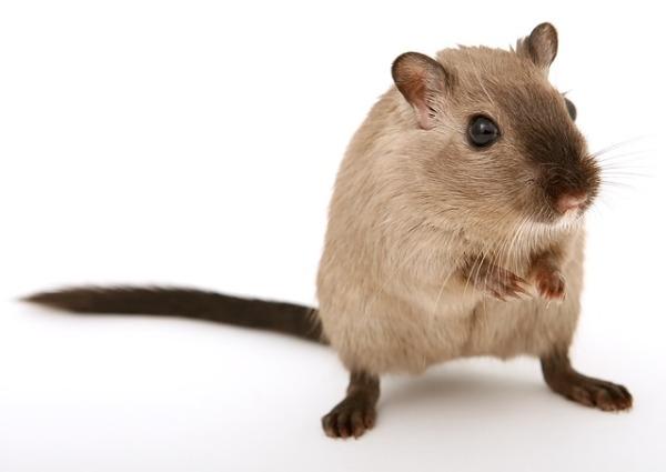 2019-01-hamster